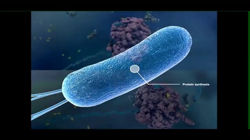 Современная клеточная теория. Прокариоты | Клеточная биология (Цитология) | НМИЦ им. В. А. Алмазова