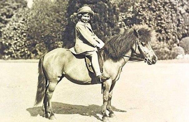 почему он лошадиный бальзам зеленый