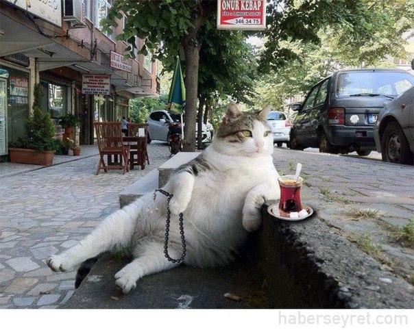 Вот так начинается день кота в Турции