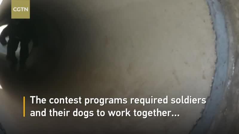 собачья работа зарубежных коллег