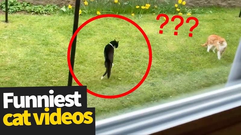 Hilarious Cat Viral Videos | Ultimate Cat Compilation 2019