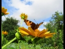 Цветы и мотыльки в моем саду!! Untitled_720x576