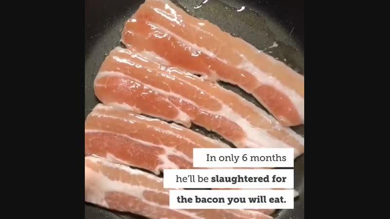 Животные не еда🌍💚💚💚💚💚