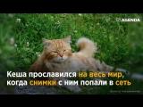 История кота Кеши — легендарного смотрителя острова Кижи