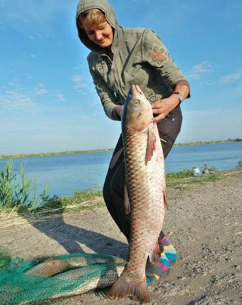платники на рыбалку в ростове на дону
