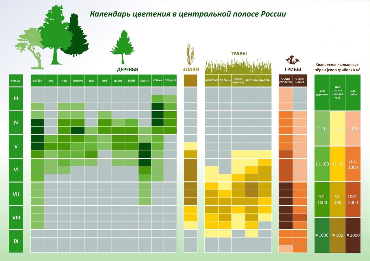 72e432c3e Календарь цветения для аллергиков по регионам и городам России ...