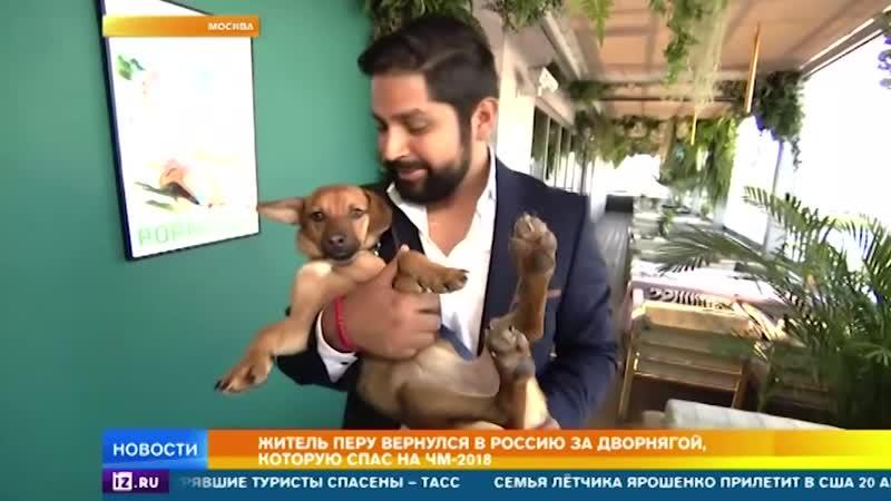 Житель Перу вернулся в Россию за собакой, которую спас во время ЧМ-2018.