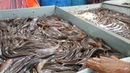 Live Fish Market / Most of The Fishes Are Alive Fresh / Biggest Whole Sale Bazar Bangladesh