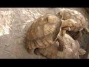 Покатай меня,большая черепаха)