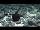 Gulper Eel Balloons Its Massive Jaws - Nautilus Live.mp4
