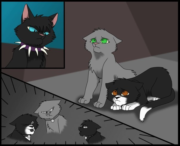Рубинка коты воители