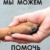 """""""АЛЬМА"""" (помощь бездомным животным) в г. Орле"""
