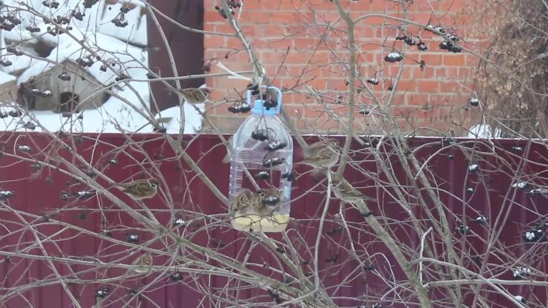 кормушка для птиц (воробьи, синицы, снегири, сороки)