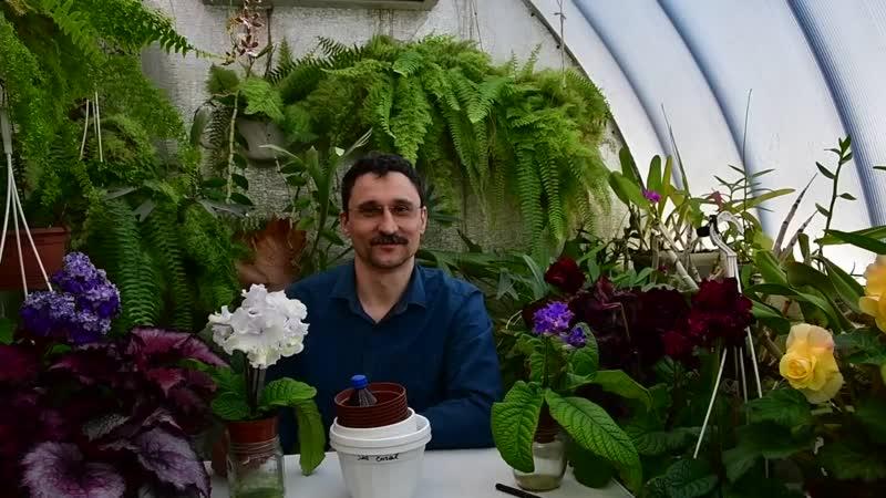 Пересадка цветущих растений