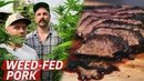 What Does Pork From Cannabis-Fed Pigs Taste Like? — Prime Time