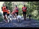TDM 2017 étape 8 canicross 6 01km avec Sam et Ivy le BBS Auris en Oisans Les Sures