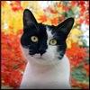 Найди кота: Одноклассники (Готовые фото-ответы)