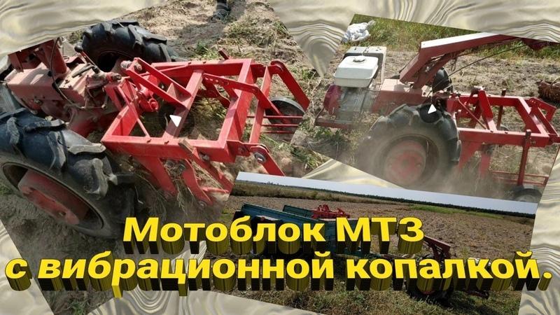 Мотоблок МТЗ с вибрационной копалкой.