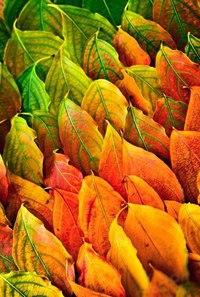 Отцвели цветы, падают листья, птицы молчат, лес пустеет и затихает.ОСЕНЬ. - Страница 6 M32niyEEDo4