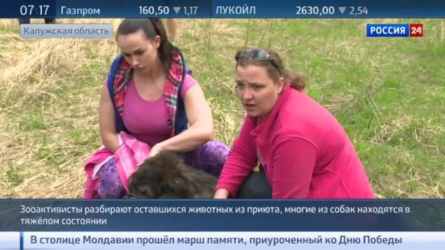 Новости на Россия 24 • Освенцим для животных: найден третий приют с могильником