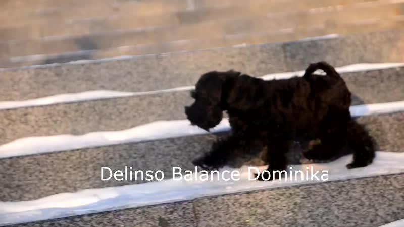 Delinso Balance Dominika