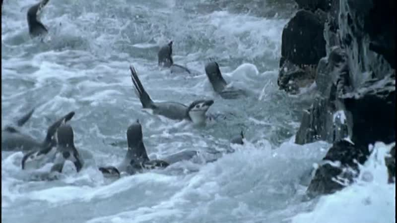 Замерзшие моря. Пингвины.