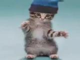 Прикольные коты танцуют