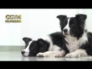 Учёные Венского ветеринарного университета разработали «судоку для собак». Эта игра призвана продлить жизнь нашим четвероногим д