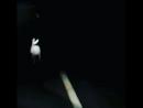 заяц на автотрассе ночью