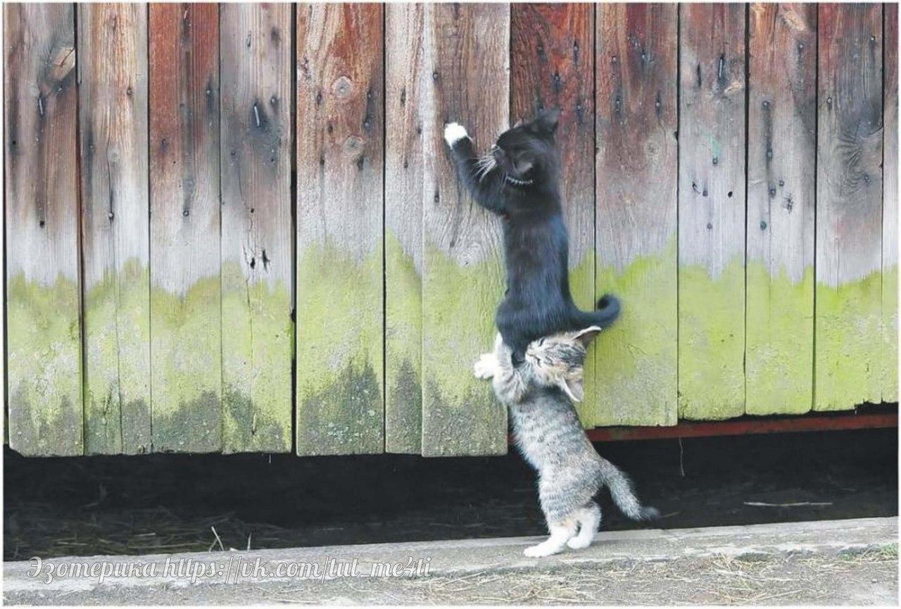 Настоящие друзья не соревнуются между собой и не завид...