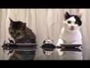 Cats _ Waiter Please!