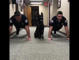 K9 Nitro is getting ready to chase bad guys with a team workout