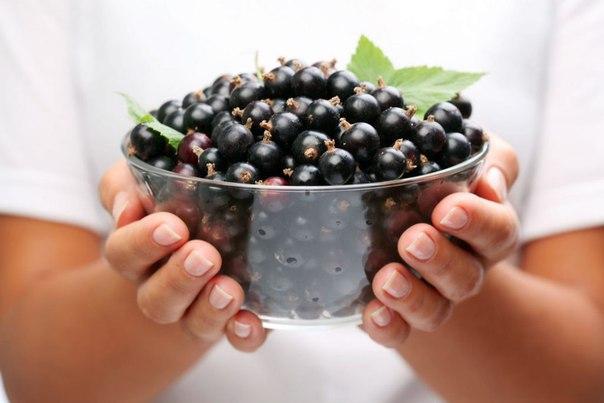 черная смородина: почему снижается урожай