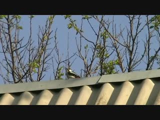 Дятел (VHS Video)