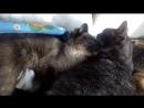 Мои коты Вася и Ёжик.mp4