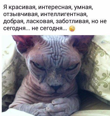 Фото №456242757 со страницы Алеси Плавинской