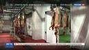 Новости на Россия 24 • В Курской области запущен новейший комплекс по переработке мяса