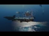 Celebrating Life - SOCORRO ISLANDS =МЕКСИКАНСКИЕ ГАЛАПАГОСЫ=  Острова Сокорро – это группа островов в Тихом океане, принадлежащих Мексике.  Эти острова, по мнению самых известных путешественников и подводных операторов, стоят в одном ряду с островом Кокос и Галапагосами по количеству подводных встреч с крупными морскими животными.  Сокорро, по праву называются «Мексиканскими Галапагосами» из-за огромного изобилия акул. За одно погружение можно встретить до 7 видов акул: гигантские стаи акул-молотов, пятнист