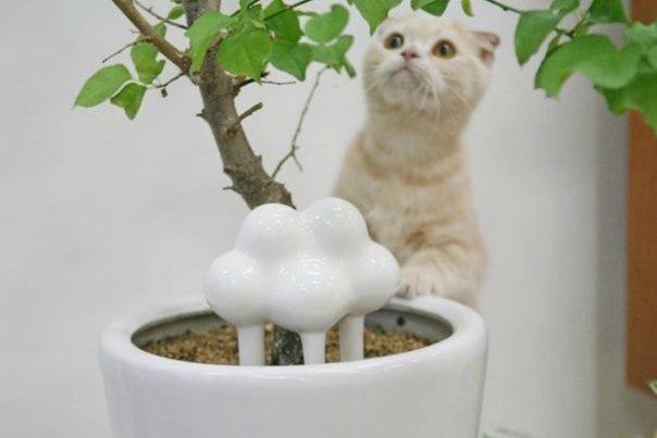 Штука: Система автополива для домашних растений