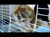 Лори - самые милые животные в мире!