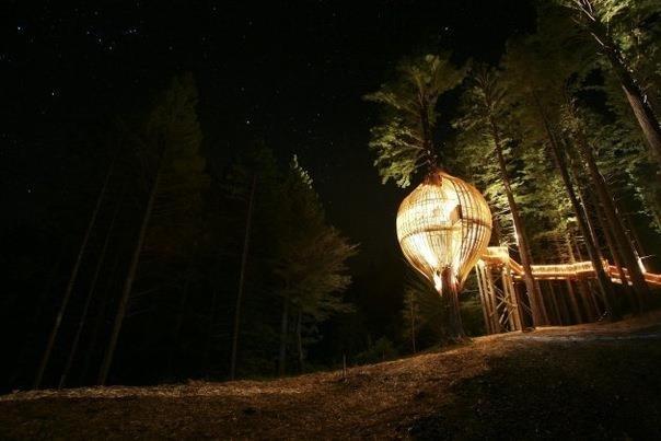 Домик на дереве или ресторан в Новой Зеландии