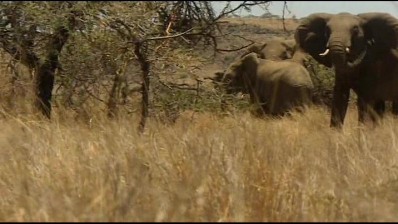 1x07 African Savannah
