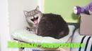 Милые, обаятельные, смешные котики и собачки! Приколы с животными