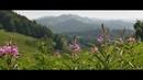Иван - чай на Алтае. Ivan Chai Herb from Altay. Camera GH5 and LOMO Anamorphic lens