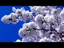 ВЕСЕННИЙ РОМАНС Шикарная Романтическая музыка! Dmitry Metlitsky - Beatiful Instrumental music