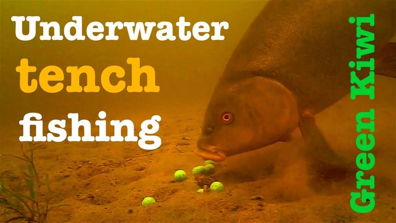 Underwater tench fishing with Green Kiwi - Breamtime S4 E3
