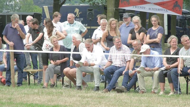 Fokdag Het Friesche Paard Twente-Achterhoek