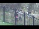 Мужчина, травящий собак в парке!