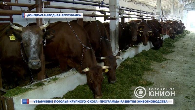 Увеличение поголья крупного скота программа развития животноводства. 26.06.2018, Панорама