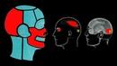 БОЛЬ В ГОЛОВЕ И ШЕЕ ИЗ ТРИГГЕРНЫХ ТОЧЕК 🔴 МИОФАСЦИАЛЬНЫЙ БОЛЕВОЙ СИНДРОМ ⭐ SLAVYOGA